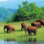 The Rich Variety of Botswana #safari Holidays